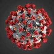 Coronavirus monitor